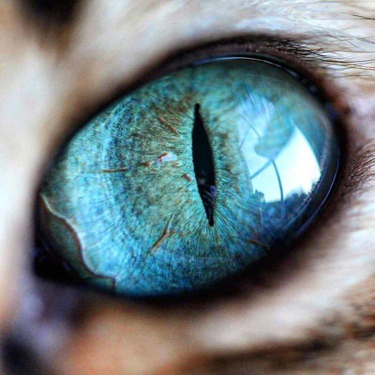 Fotografa faz imagens dos olhos de seus gatos (1)