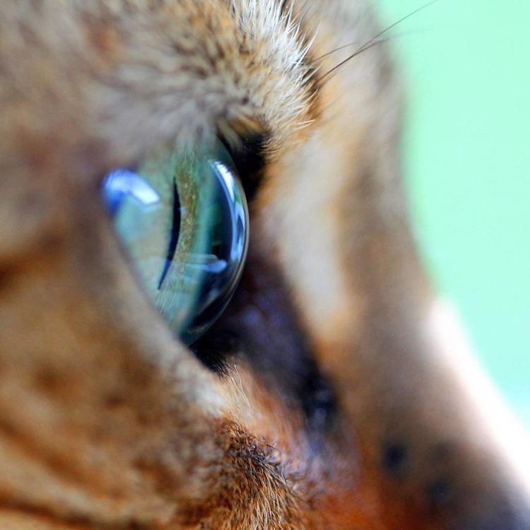 Fotografa faz imagens dos olhos de seus gatos (2)