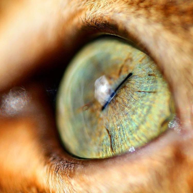 Fotografa faz imagens dos olhos de seus gatos (3)