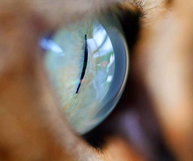 Fotografa faz imagens dos olhos de seus gatos (4)