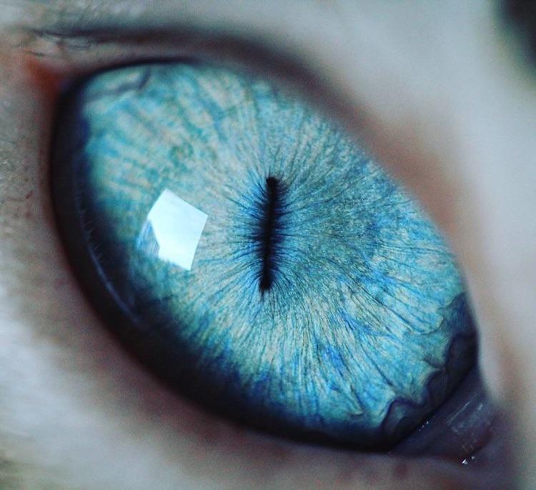 Fotografa faz imagens dos olhos de seus gatos (5)
