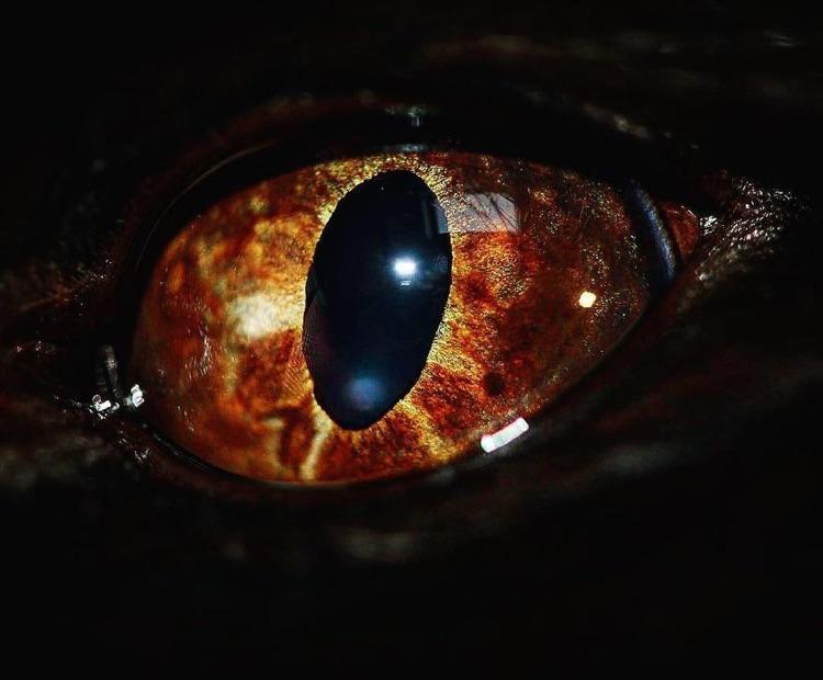 Fotografa faz imagens dos olhos de seus gatos (7)