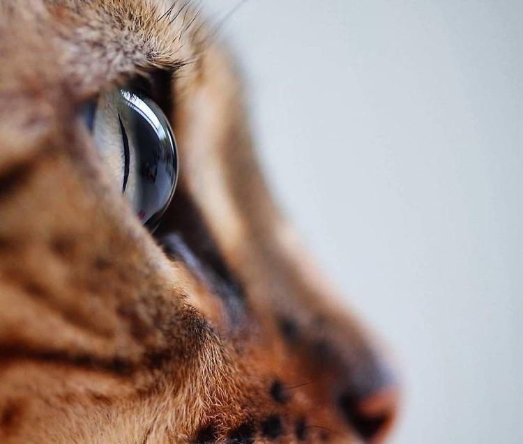 Fotografa faz imagens dos olhos de seus gatos (8)