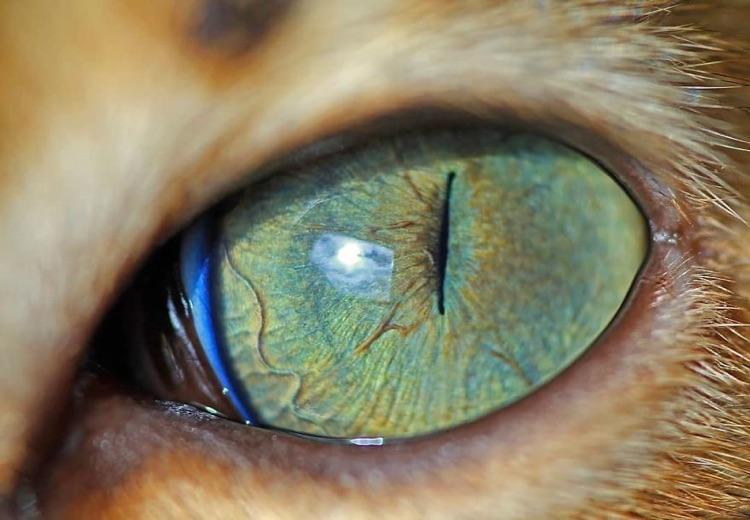 Fotografa faz imagens dos olhos de seus gatos (9)