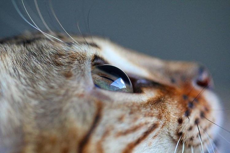 Fotografa faz imagens dos olhos de seus gatos (10)