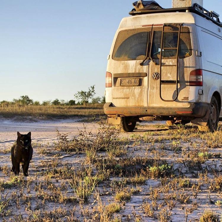 Viajando com o gato (5)