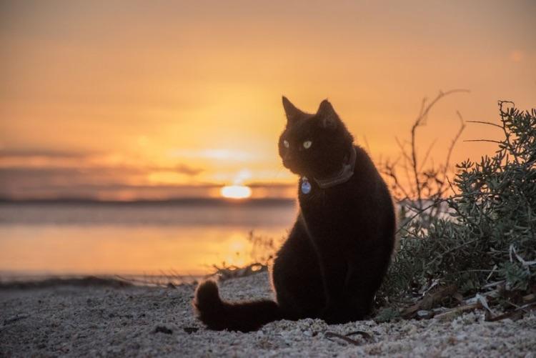 Viajando com o gato (6)