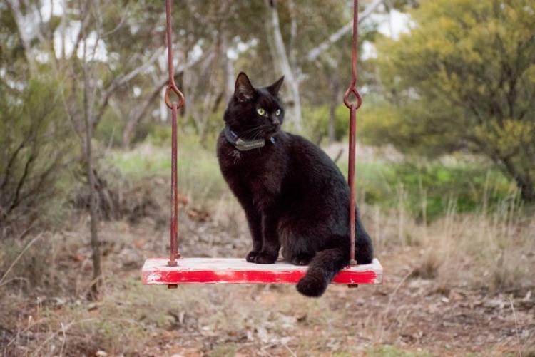 Viajando com o gato (8)