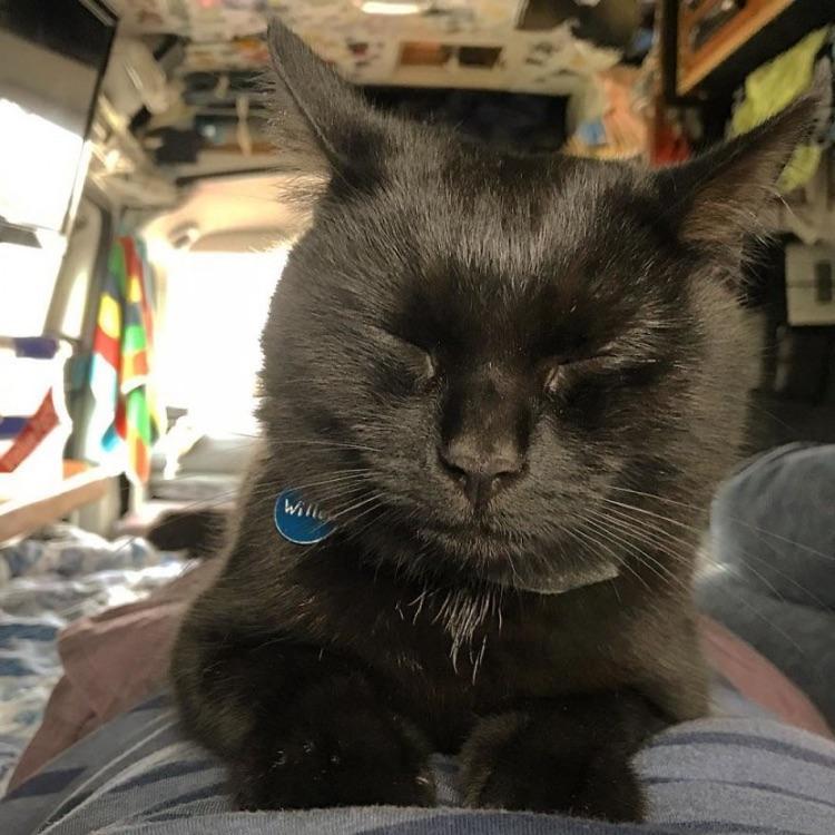Viajando com o gato (10)