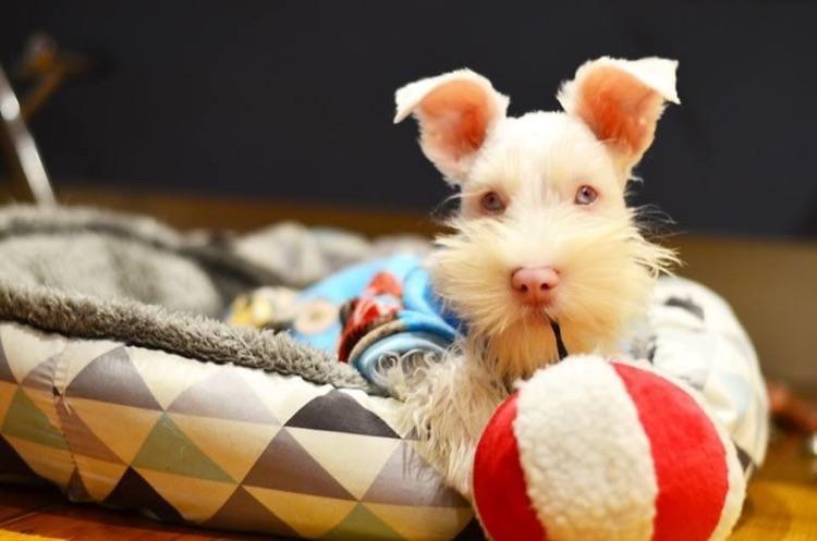 Cão Albino com óculos de sol (3)