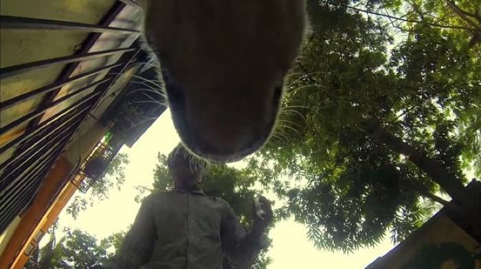 GoPro colocada em cachorro de rua (4)