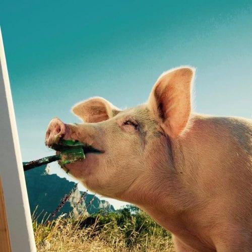 Porco Pintor (1)