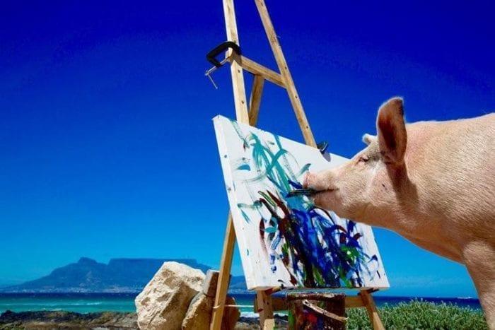 Porco Pintor (2)