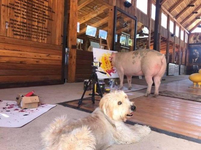 Porco Pintor (3)