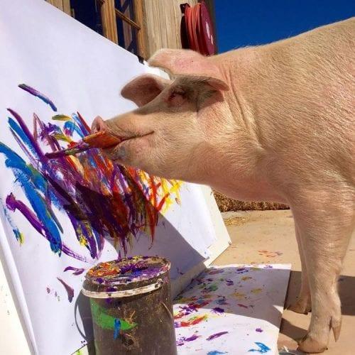 Porco Pintor (4)