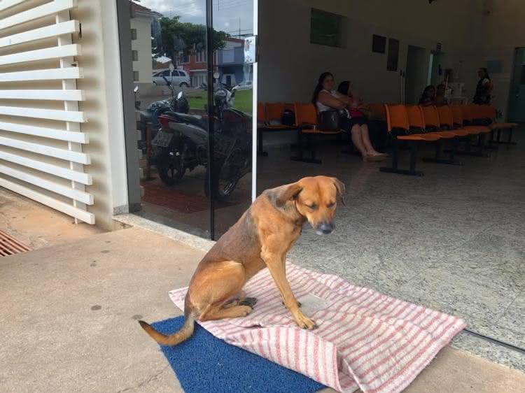 Cão espera por dono em hospital (1)