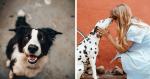 20 razões para convencer qualquer pessoa a ter um cachorro em casa