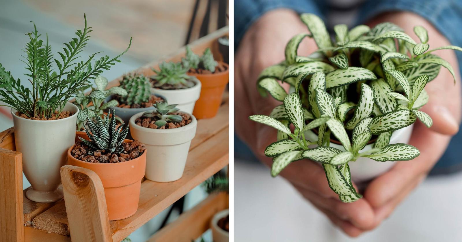 10 plantas de casa que são boas para sua saúde (e fáceis de cuidar)