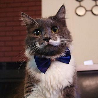 gato-com-bigode