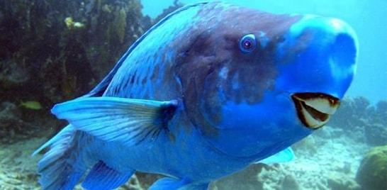 peixe-sorrindo