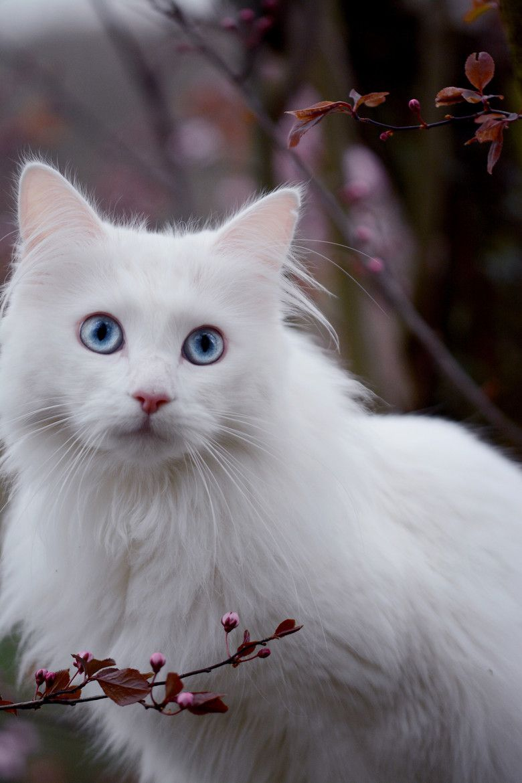 gato-branco