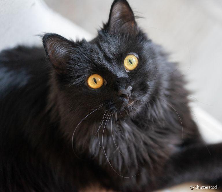 gatos-mais-lindos