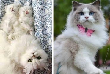 gatos-lindos