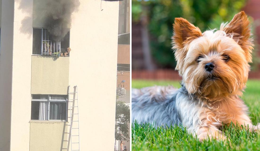 Garis resgatam cãozinho em varada de apartamento em chamas