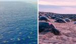 Drone consegue fazer imagens incríveis de milhares de tartarugas-verdes juntas