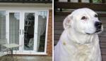 Cachorro se transforma em herói para salvar mulheres de violência doméstica