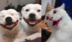 animais-sorrindo
