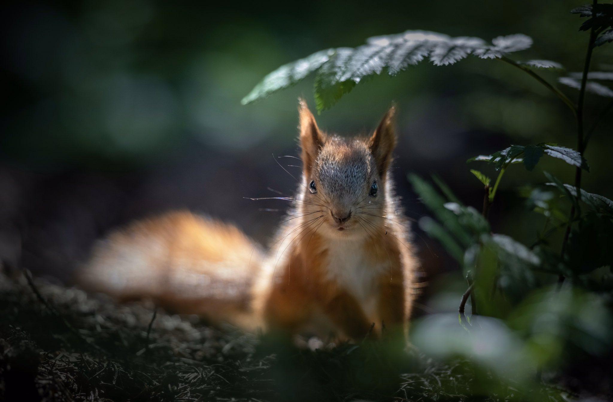 fotografa-registra-esquilos-vermelhos-bebes