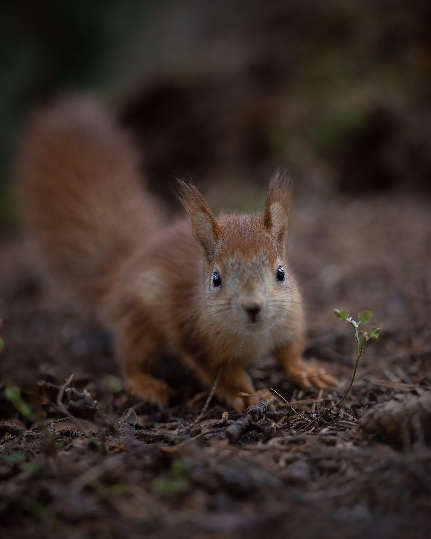 fotografa-registra-esquilos-vermelhos