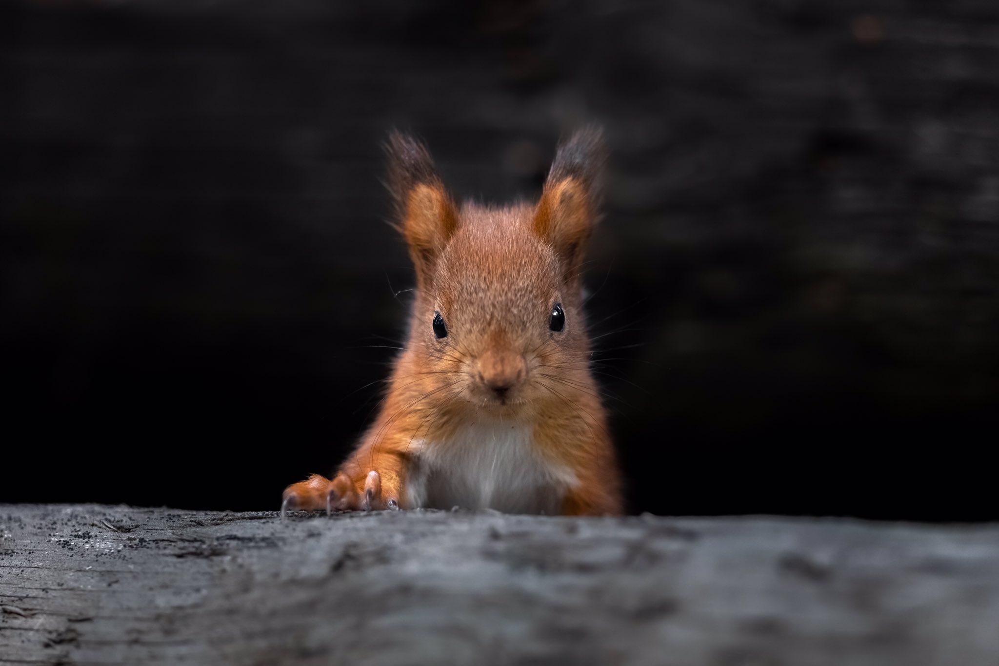 fotografa-registra-esquilos-bebes