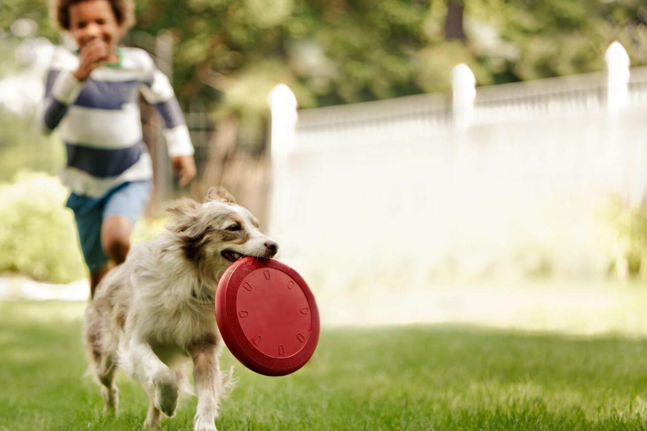 como-brincar-com-cachorros