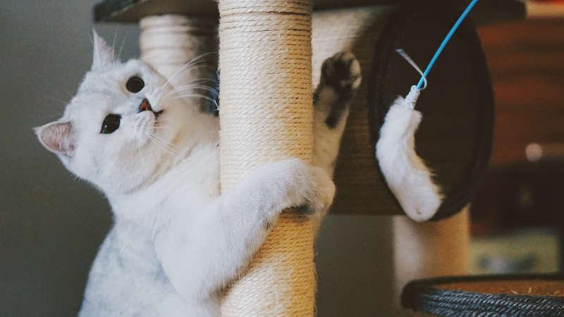 brinquedo-para-gatos