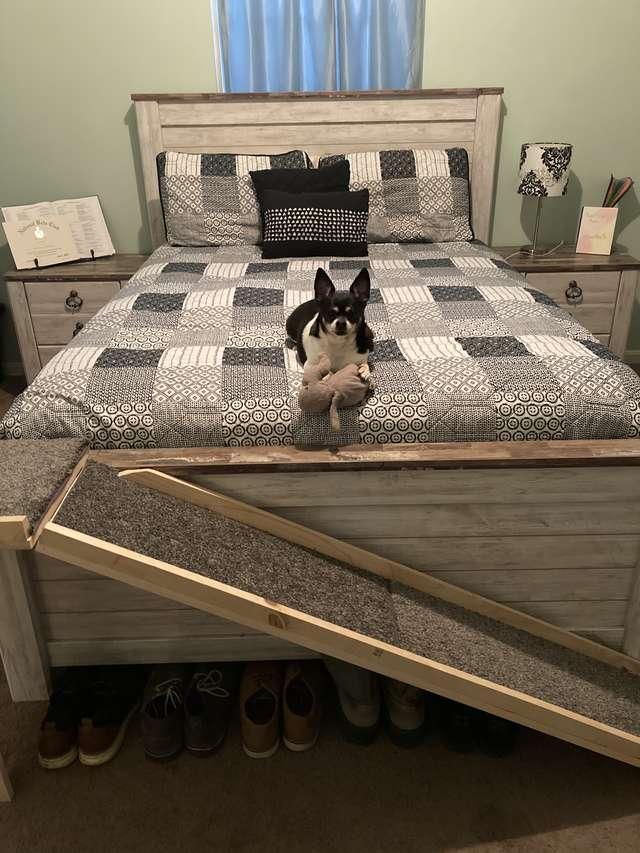 homem-faz-rampa-para-cão-idoso-subir-na-cama