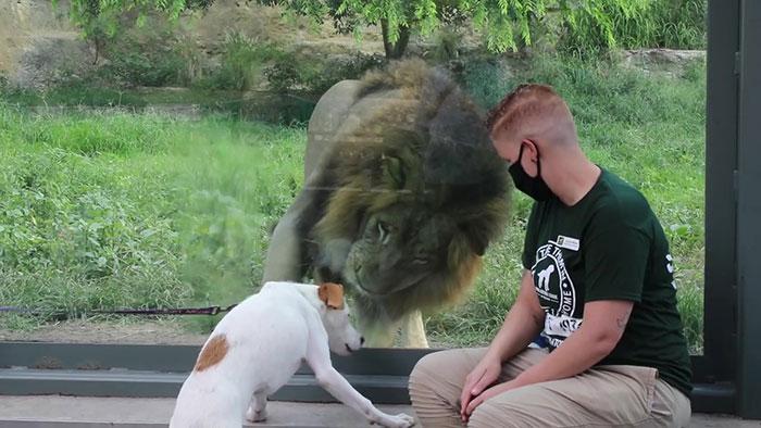 abrigo-leva-caes-ao-zoologico