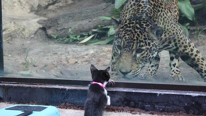 abrigo-leva-animais-ao-zoologico