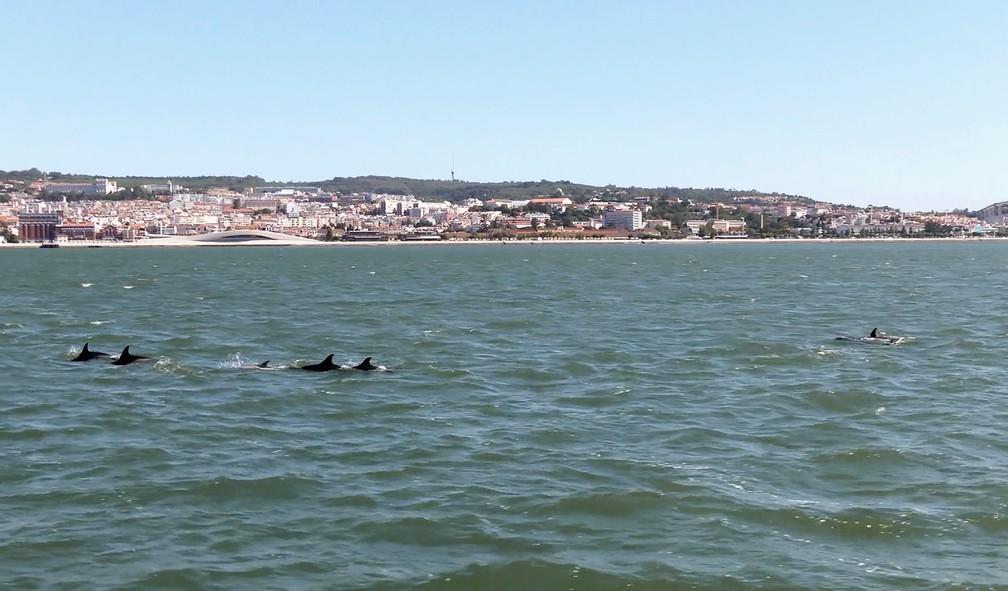 golfinhos-reaparecem-em-lisboa