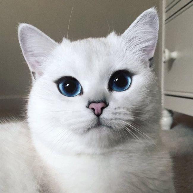 gato-delineador