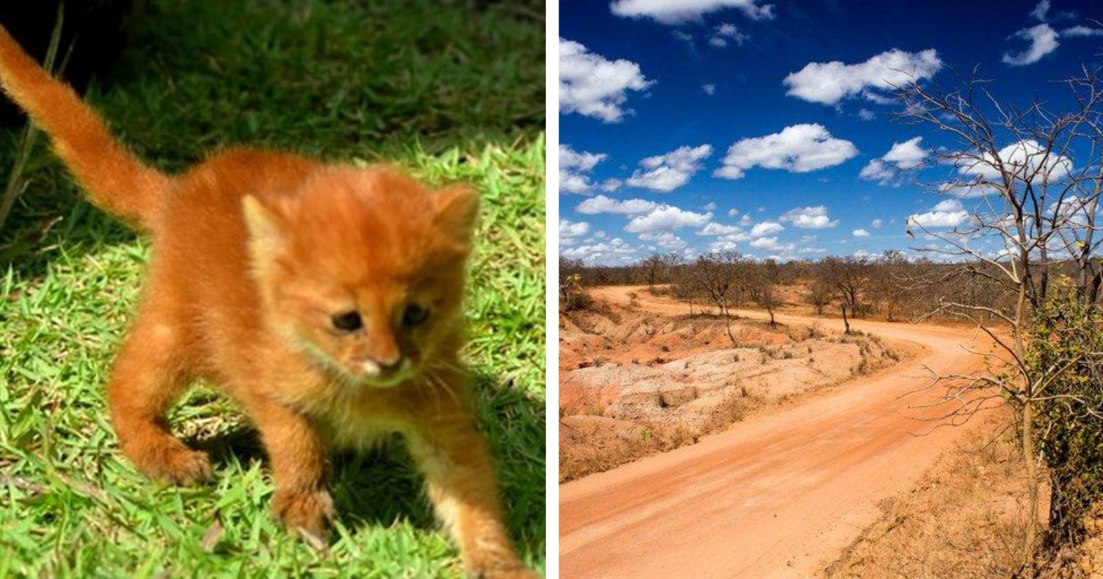 Filhote de raça ameaçada de extinção é resgatado no Sertão da Bahia