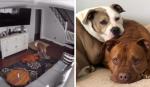 Câmeras escondidas mostram cachorro reagindo de forma inesperada com irmão doente