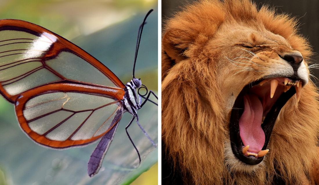 Conheça os 14 animais que não poderiam ser mais lindos!