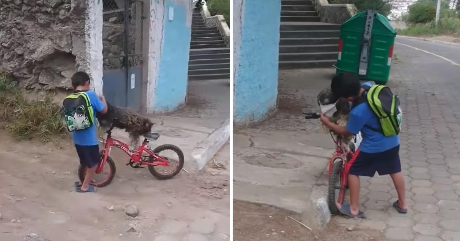 Vídeo de garoto protegendo cão com máscara se torna a coisa mais fofa da web