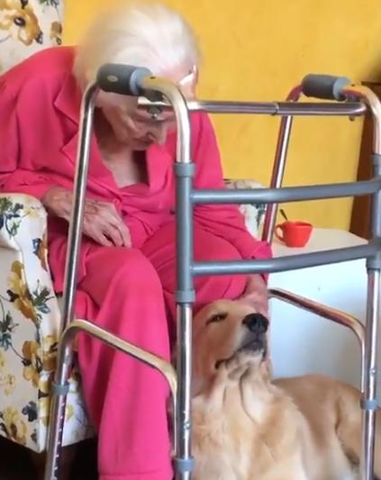golden-retriever-cuida-de-idosa-de-100-anos
