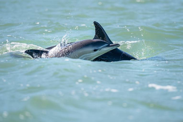 golfinhos-em-lisboa