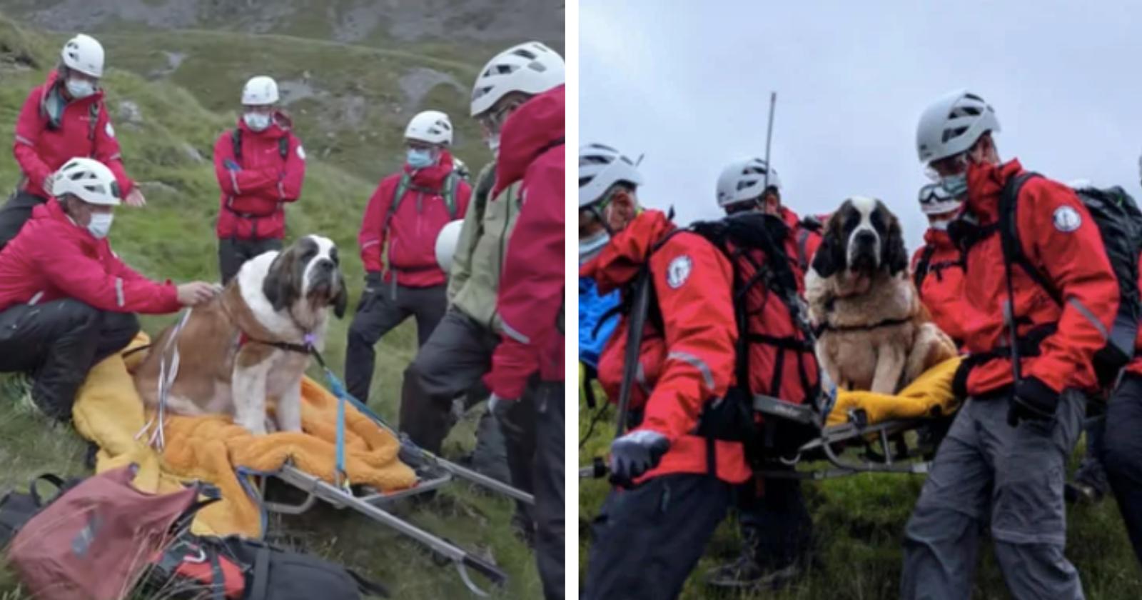 Voluntários se mobilizam para salvar cadela presa na montanha mais alta da Inglaterra
