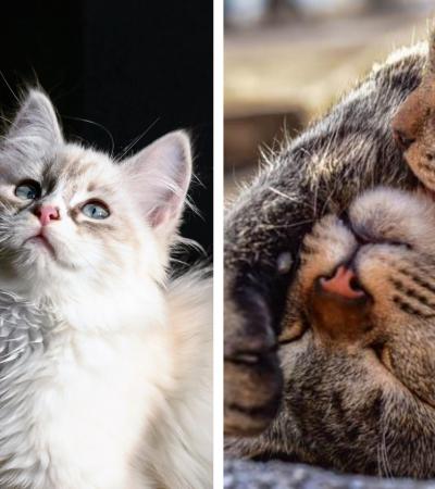 10 motivos que comprovam: ter dois gatos é melhor que um!