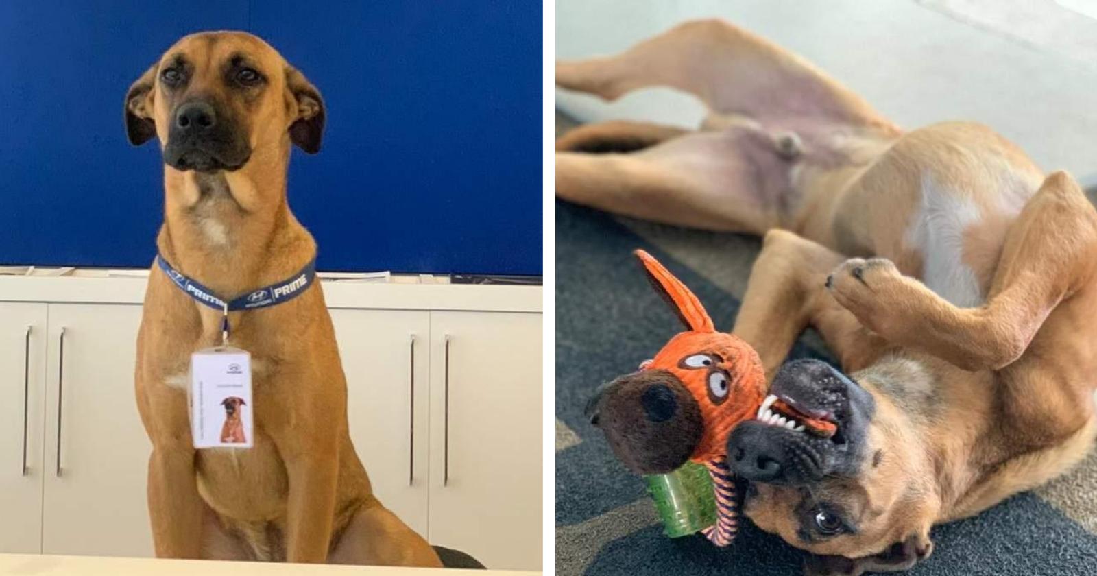 Concessionária adota cãozinho e transforma o vira-lata em uma estrela!